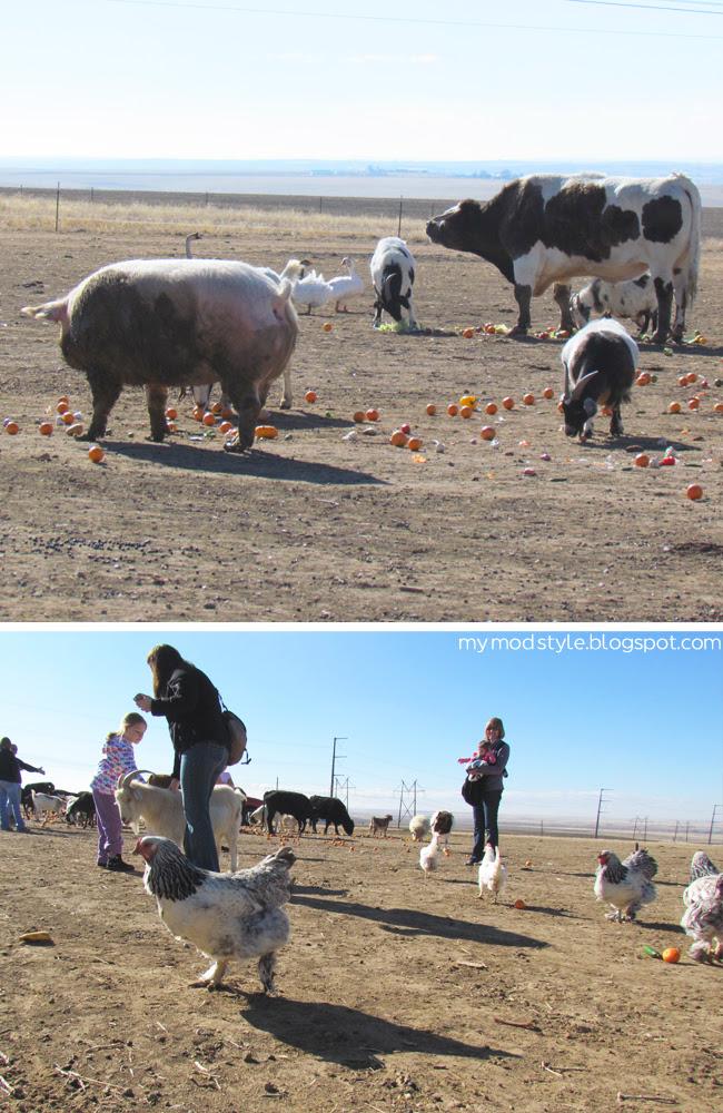 FARM veggietime1