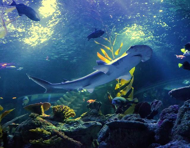 SeaLife (39)muok