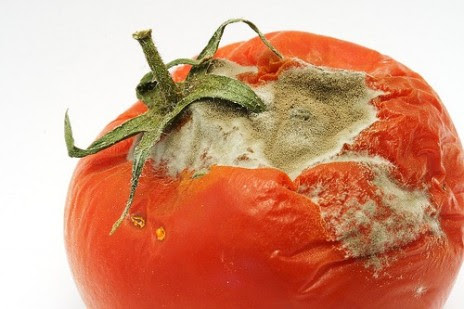 Image result for bad tomatoes