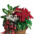8 Tips for Christmas Flower Delivery to Your Best Customers