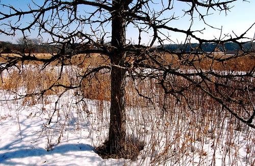 An evil tree
