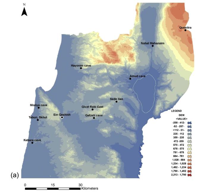 """Organización de la tecnología lítica en 'Ein Qashish, una tarde del Paleolítico Medio yacimiento al aire libre en Israel por Ariel Malinsky-Buller, Ravid Ekshtain y Erella Hovers """"' Ein Qashish (EQ) es una tarde Paleolítico Medio (w60 ka) yacimiento al aire libre situado en el este Yizra'el Valle del monte. Carmel, en el centro geográfico entre algunos de los principales sitios de cuevas del Paleolítico Medio en el norte de Israel. Tres temporadas de excavaciones en el sitio revelaron una pequeña colección de fauna y una diversa conjunto lítico. En este artículo discutimos la composición, tecnología de reducción, y las estrategias de material de curación primas representadas en la asamblea. El conjunto está dominado por escama, con bajas frecuencias de artefactos retocadas y de núcleos. Se identificaron varias secuencias de reducción. Artículos de los métodos Levallois aparecen en bajas frecuencias . Los artefactos modificados incluyen escamas ligeramente retocadas y cuchillas, raederas, truncamientos y buriles. Las frecuencias bajas de elementos primarios, elementos básicos de recorte, y núcleos sugieren que sólo una parte de la secuencia de reducción se llevó a cabo en el lugar.  Raederas pueden haber sido importados en la localidad.  En contraste, las secuencias de reducción no Levallois cortos se aplicaron en el sitio.  El carácter expeditivo del retoque y de secuencias de reducción locales sugiere que el sitio representa una ocupación efímera (s), a orillas del arroyo Qishon.  La naturaleza del conjunto lítico no es coherente con las tareas específicas como la carnicería o la caza.  Aspectos tecnológicos de la asamblea y sus similitudes con la composición a los observados en los sitios de habitación que se encuentra en cuevas a finales del Paleolítico Medio """"(leer más / acceso abierto) (fuente de acceso abierto:. Cuaternario Internacional 331:234-247, 2014 a través de la Academia. edu)"""