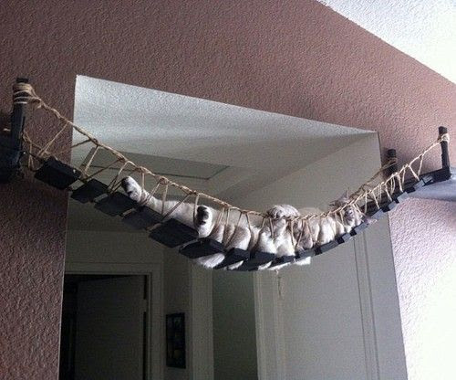The Cat Bridge Someone on Etsy has finally made the ultimate in cat accessories. The Cat Bridge is for the adventurous indoor cat to scale from one part of the home to another. Handmade from wood, rope and pine, you can buy your Cat Bridge with exact custom dimensions to fit any part of your home. BUY IT HERE