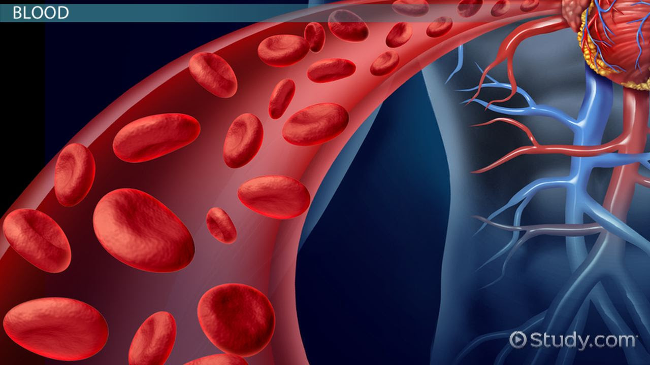 What Is The Composition Of Blood Video Lesson