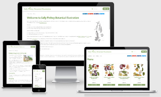 New Website for Sally Pinhey Botanical Illustration
