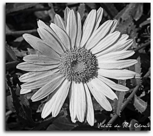 Concurso Patagonica Nº 95 Flores En Blanco Y Negrohay Ganadores