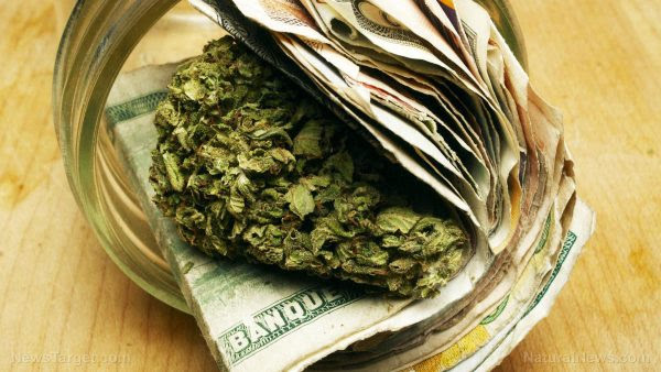 Image result for New Study Reveals Why Cannabis is Still Illegal, Legal Pot DESTROYS Big Pharma Profits