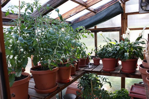 Hollys Greenhouse