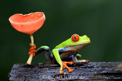 Tree Frog by Megan Lorenz
