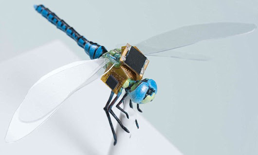 The GM cyborg dragonflies that can spy on you