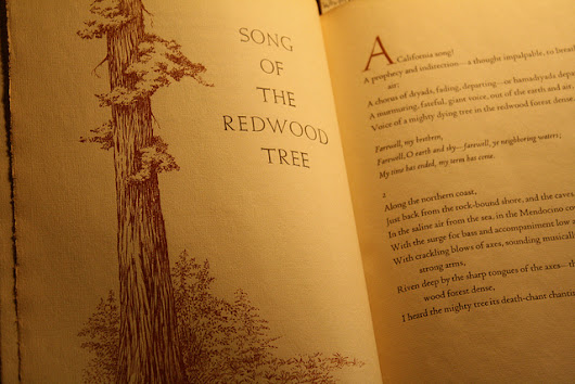 Walt Whitman Sings the Song of the Redwoods