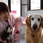 Amazonで買って保護施設を支援 犬猫を助ける新しい仕組み | sippo(シッポ) | - asahi.com