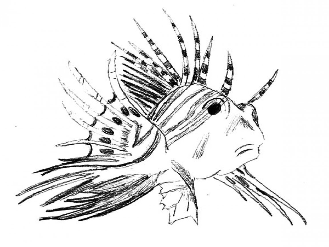 Lionfish Coloring Page at GetColorings.com | Free ...