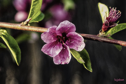 Welcome spring... by lujaban