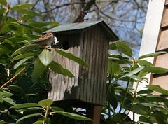sparrow brings stuff