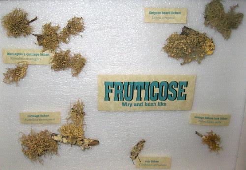Fructicose