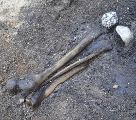 Bone trove in Denmark tells story of 'Barbarian' battle