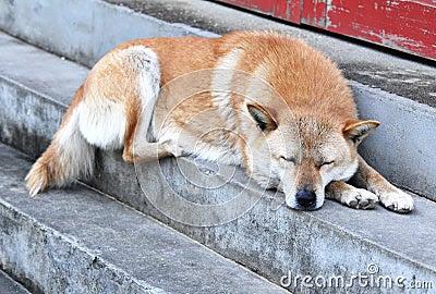Sleepy Watchdog