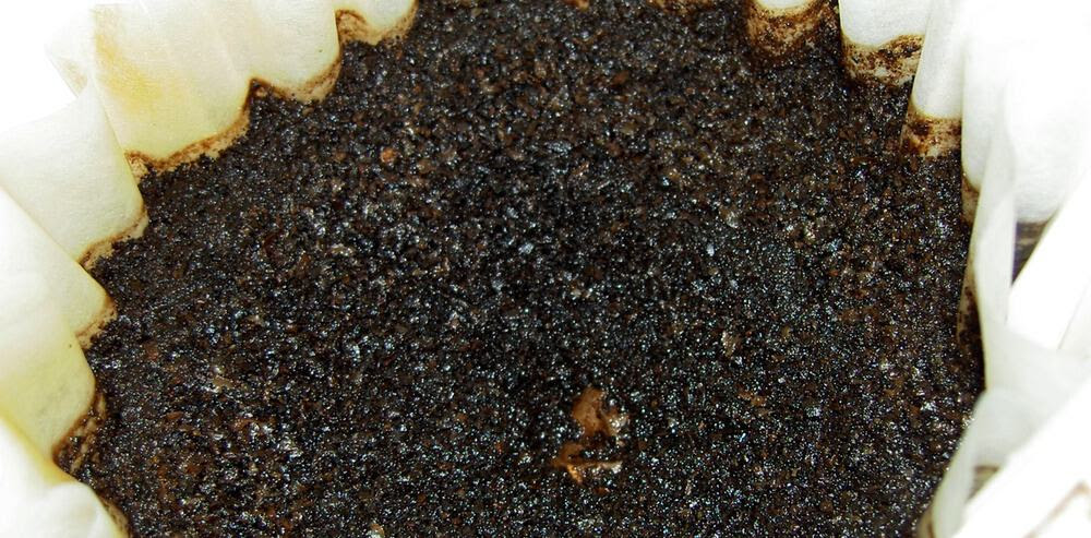 Using Recycled Coffee Grounds in the Garden
