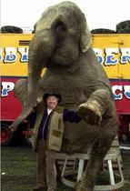 Perú prohíbe el uso de animales salvajes en los circos
