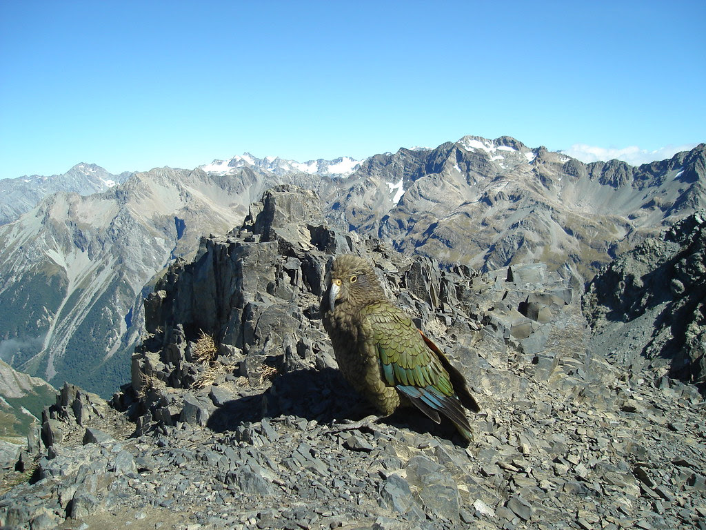 nz_avalanche_peak
