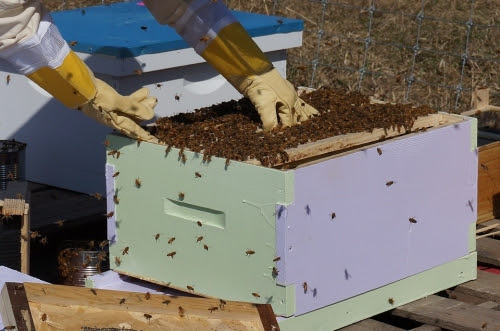 Introduction to Beekeeping - Catch the Buzzzzzzz!