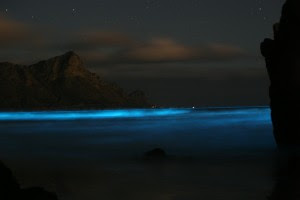 Blue Tide.  Bruce Anderson, 2007.