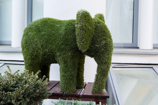 Houston Topiary Experts Offer Tips to Help You Take Care of Your Deck Topiaries