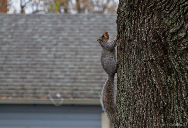squirrel paused, climing a tree
