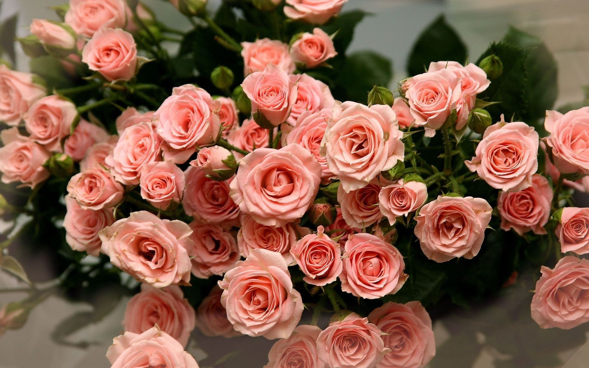 Beautiful Rose Flowers Wallpapers For Desktop Background