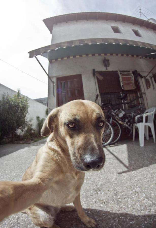 dog self portrait