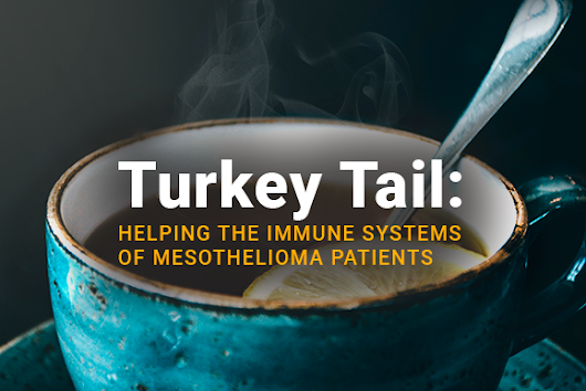 Turkey Tail: Helping the Immune Systems of Mesothelioma Patients - MesotheliomaGuide