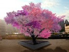 This One Tree Grows 40 Different Types Of Fruit, Is Probably From The Future