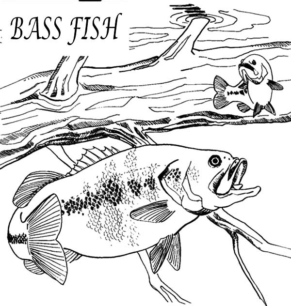 Bass Fish Coloring Pages To Print Coloring Pages