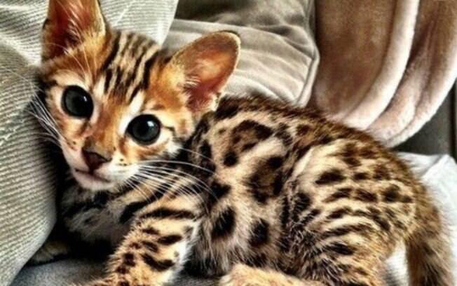 Resultado de imagem para gatinhos charmosos
