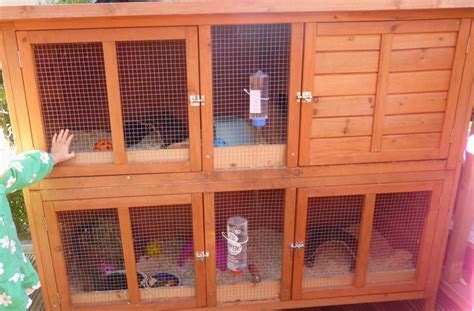 Guinea Pigs & set up, Large double hutch   Hope Valley, Derbyshire   Pets4Homes