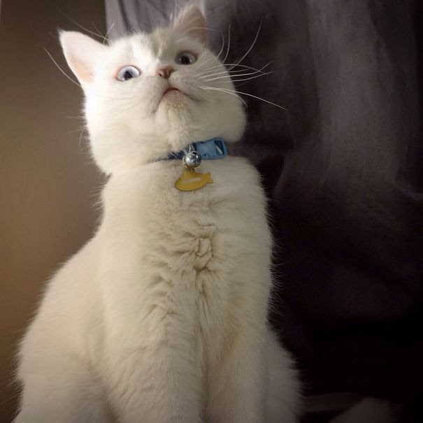 Δραματικές αντιδράσεις γατών που αξίζουν όσκαρ! γάτες Γάτα αντιδράσεις γατών