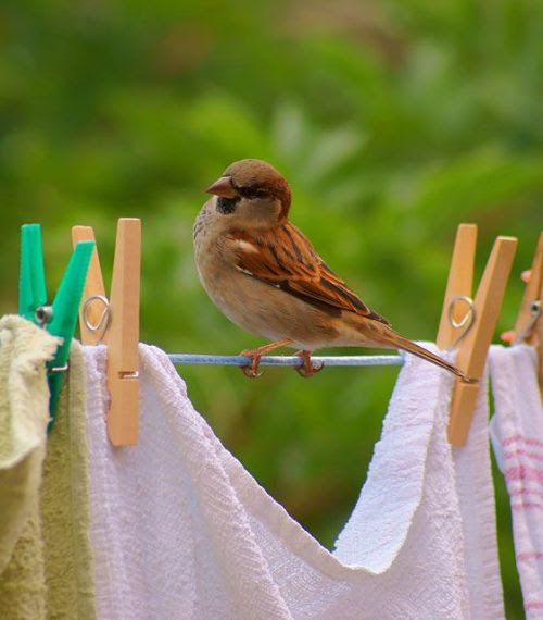 sweetruffles:  I need to dry off. Should I hang out here with the clothes?