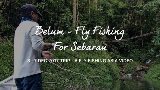 Video: Fly Fishing for Sebarau – Hampala Barb and Houseboat Stay in Royal Belum