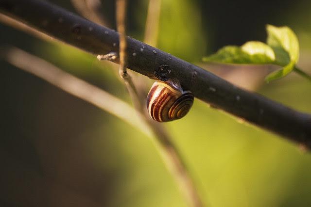 snailbranch