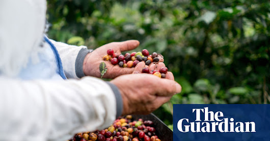 UK scientists turn coffee industry waste into electricity | Business | The Guardian