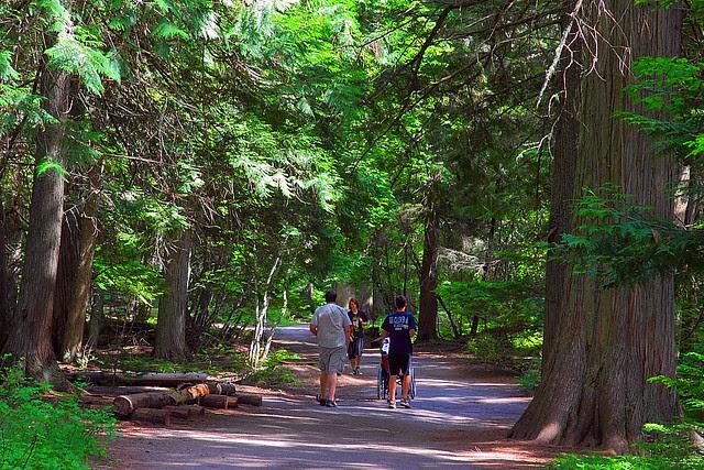 IMG_2397 Trail of the Cedars, Glacier National Park