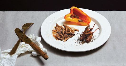 Why Aren't We Eating More Insects?