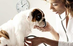 Do You Know These 5 Warning Signs Of Pet Cancer?