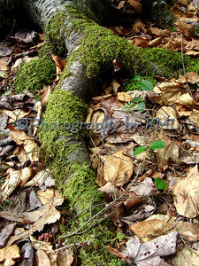large root covered with green moss