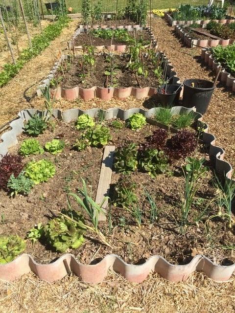 permaculture et jardin vivant google. Black Bedroom Furniture Sets. Home Design Ideas