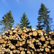 Set up a Company in the Forestry Sector