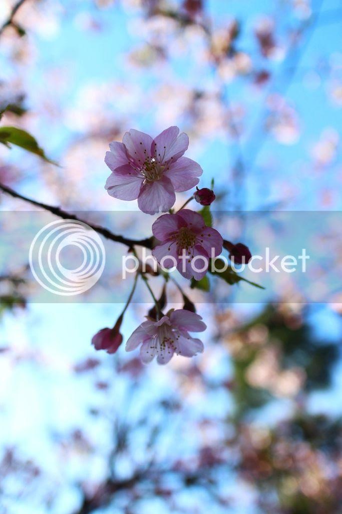 photo IMG_0663_zpsbi8aezg2.jpg