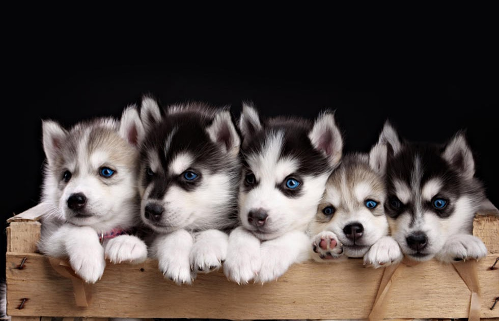 ventura99: Craigslist Buffalo Dogs For Adoption