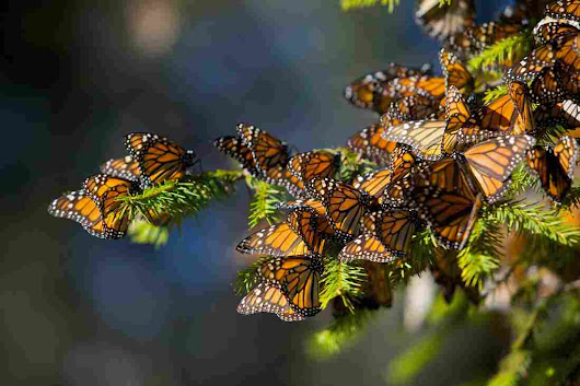 Report: More Pollinator Species In Jeopardy, Threatening World Food Supply